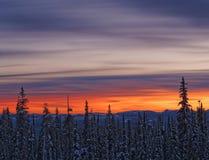 Tramonto vibrante sopra l'abetaia della neve Fotografie Stock Libere da Diritti