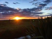 Tramonto vicino all'oceano, Nuova Zelanda fotografie stock