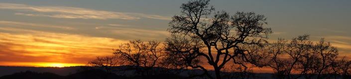 Tramonto vivo panoramico con gli alberi Immagini Stock