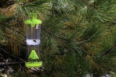 Trampa de la abeja Foto de archivo libre de regalías