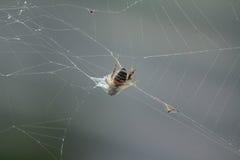 Trampa de la araña Fotos de archivo