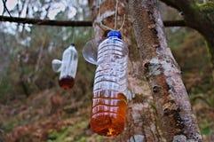 Trampa de la avispa en botella plástica Imagenes de archivo