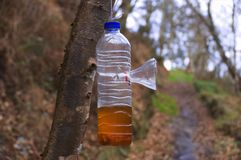 Trampa de la avispa en botella plástica Foto de archivo libre de regalías