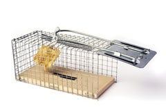 Trampa de la cucharada o del ratón Imagen de archivo libre de regalías