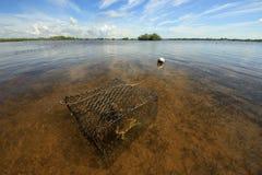 Trampa del cangrejo con el cangrejo en el sonido de Barnes, la Florida imágenes de archivo libres de regalías
