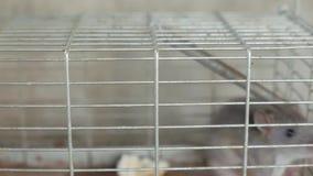 Trampa del rat?n almacen de metraje de vídeo