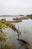 Trampas de lámina tradicionales de la pesca usadas en humedales cerca de la costa en Benin Fotos de archivo libres de regalías