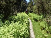 Tramping on Copland track on West Coast of New Zealand stock image