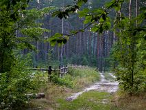 A trampled road and a small fence in the forest royalty free stock image
