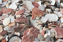 Trampled scallops Royalty Free Stock Images