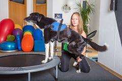Trampolino del cane Fotografie Stock