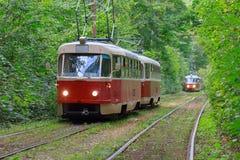 Trams mit den Lichtern an im Waldtunnel Stockbild