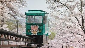 Tramwaje biegają przez halnych grani Wypełniający z czereśniowymi okwitnięciami które fullbloom w kwietniu, Funaoka Sendai fotografia royalty free