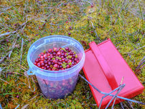 Tranbär Royaltyfri Foto