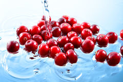 Tranbär. Hög av bär i vatten royaltyfria bilder