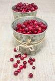 Tranbär i små hinkar royaltyfri bild