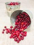 Tranbär i små hinkar Royaltyfria Bilder