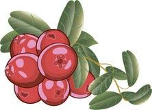 Tranbär isolerade symbolen stock illustrationer