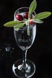 Tranbär Sage Beverage Fotografering för Bildbyråer