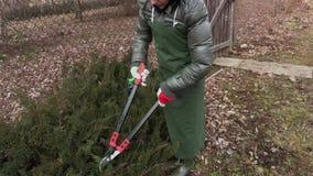 Tranchants de jardinière de femme des buissons banque de vidéos