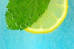 Tranche de citron, feuille en bon état et eau avec des bulles Images stock