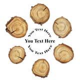 Tranche en bois en cercle Photographie stock libre de droits