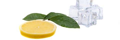 Tranche ronde de citron lumineux et juteux et une vue de côté de quelques feuilles de vert et glaçons sur un fond blanc D'isoleme photographie stock