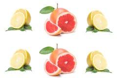 Tranches d'isolement d'agrume, coupe de fruit frais dans la demi orange, pamplemousse rose, citron, dans une rangée, sur un fond  photo libre de droits