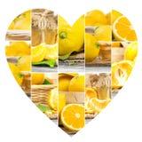 Tranches de préparation de citron Image libre de droits