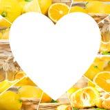 Tranches de préparation de citron Images stock