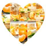 Tranches de préparation de mandarine Images stock