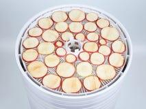 Tranches fraîches d'Apple sur les plateaux d'un dessiccateur électrique spécial FO photo libre de droits