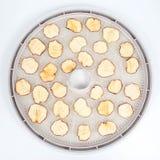 Tranches sèches d'Apple sur des plateaux de dessiccateur électrique spécial de fruit photos stock