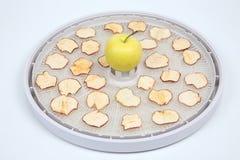 Tranches sèches d'Apple sur des plateaux de dessiccateur électrique spécial de fruit photo stock