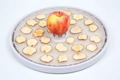 Tranches sèches d'Apple sur des plateaux de dessiccateur électrique spécial de fruit image stock