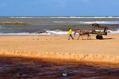 Trancoso Bahia, Brasilien Juli 29, 2017: Strand av infödingarna Royaltyfria Foton
