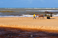 Trancoso, Bahia, Brasilien 29. Juli 2017: Strand der Eingeborenen Lizenzfreie Stockfotos