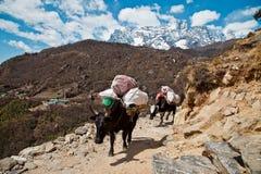 Traînée au camp de base d'Everest Photos libres de droits