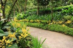 Traînée dans les jardins botaniques de Singapour Photo stock