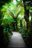 Traînée de forêt tropicale de repos de Maits sur la grande route d'océan, Australie Image stock