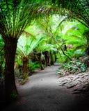 Traînée de forêt tropicale de repos de Maits sur la grande route d'océan, Australie Photos stock