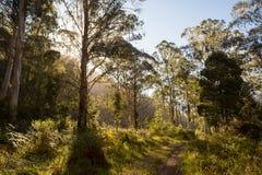 Traînée de rivière de Delatite à Mt Buller Images libres de droits