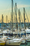 Trani, harbor Stock Photography