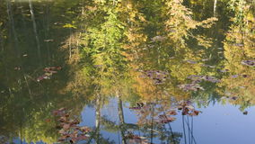 Tranqiul scene of a lake in the forest. Reflection of autumn trees and blue sky in the lake surface stock video footage