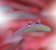 Tranquil abstract closeup art background.Abstract macro photo with water drops. Stock Image