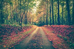 Tranquil autumn forest with a footpath through a beautiful woods Royalty Free Stock Photos