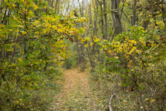 Tranquil autumn forest scene Stock Image