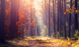 Tranquil autumn landscape stock photography