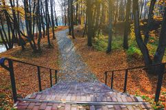 Tranquil autumn scene with stairs in the empty park. Stone road covered by red leaves passing between the trees royalty free stock images