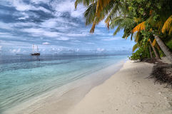 Tranquil beach with beautiful vegetation Royalty Free Stock Images